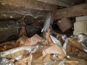 Crawlspace Mold Growrh